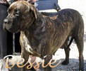 Click here for Bessie's page